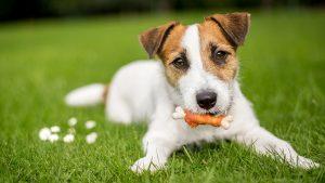 Les règles à suivre pour garder son chien en bonne santé