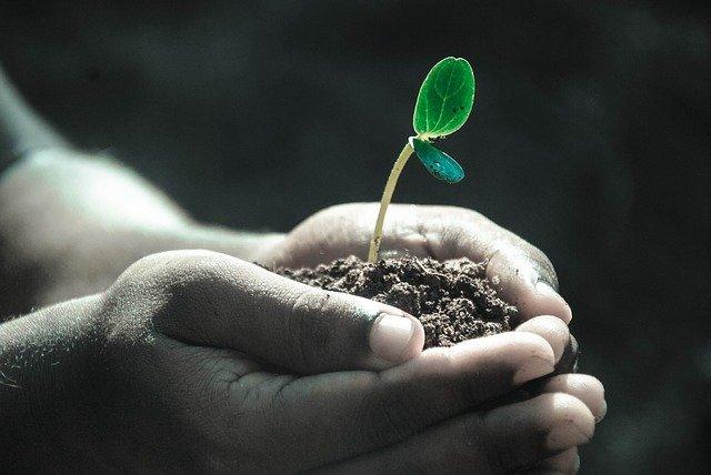 Bien choisir un végétal à planter dans son jardin : les éléments à vérifier en jardinerie